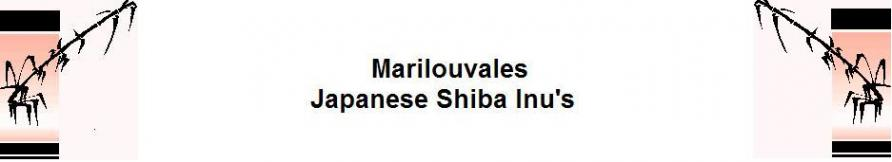 www.japaneseshibainu.co.uk Logo